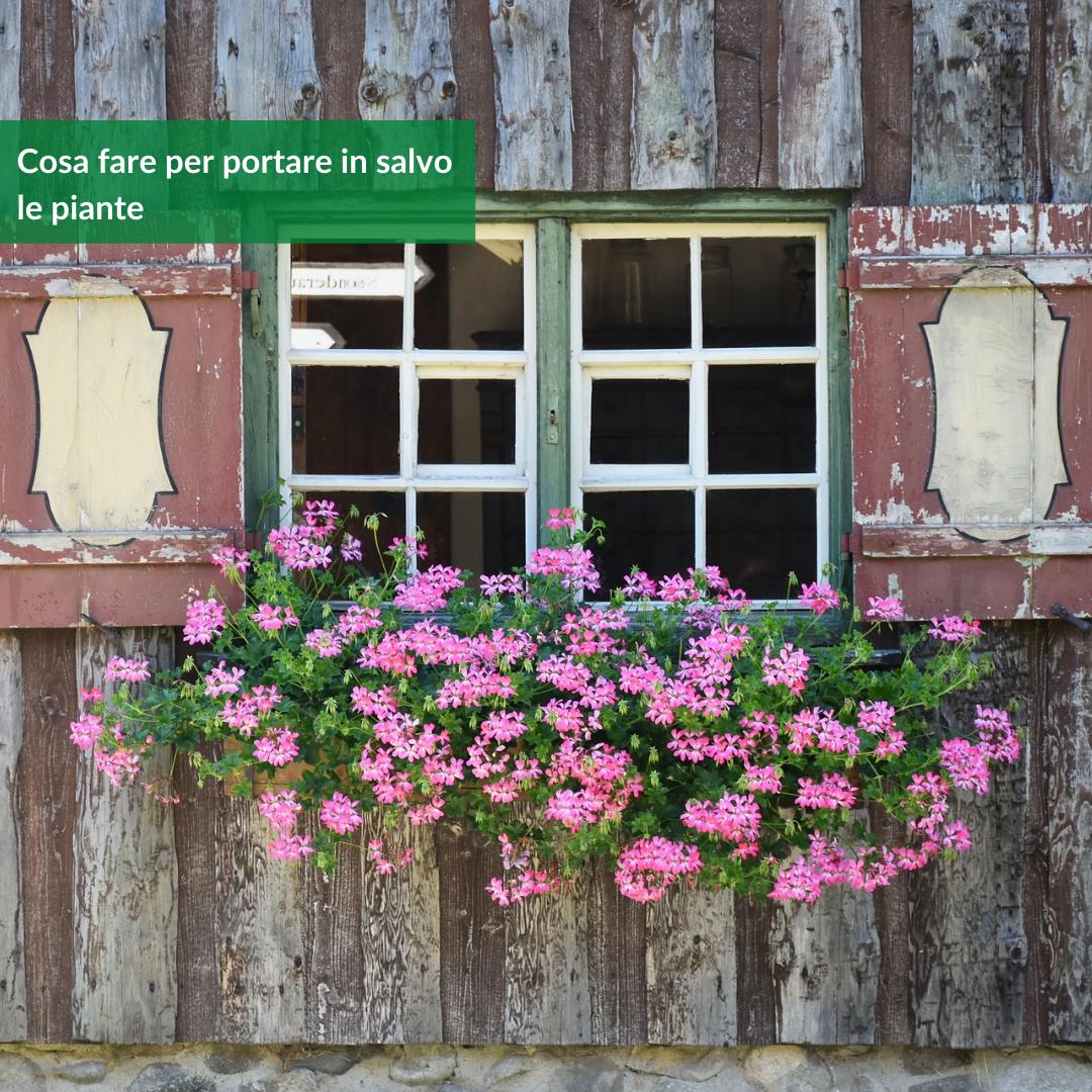 cosa fare per portare in salvo le piante
